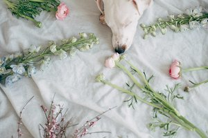 flowers and puppy