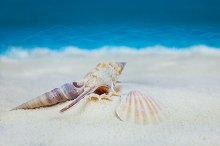 Shells on sandy beach on blue blurred background