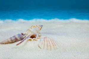 Shells on sandy beach on blue blurred background