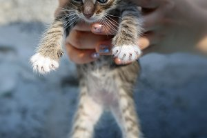 Small, striped, homeless kitten