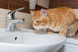 Cat and  water in the sink