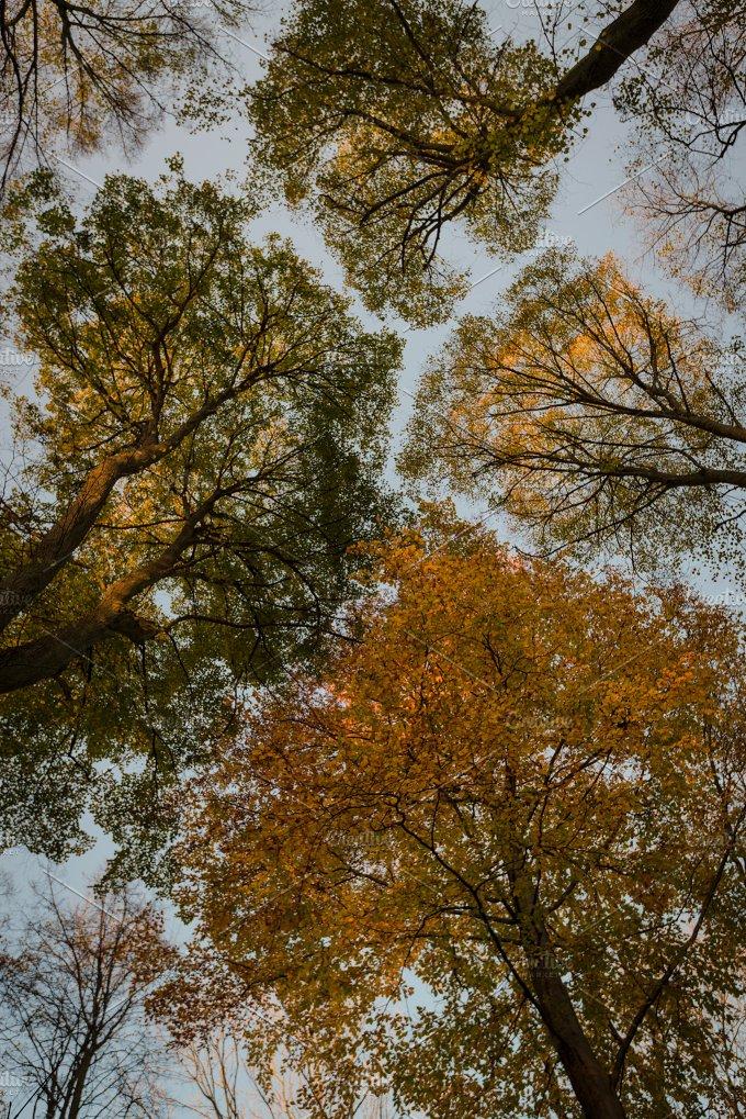 Colors of autumn... - Nature