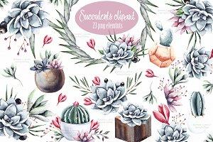 Succulents & Cactus clipart