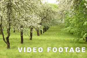 Apple tree alley in the farm. Smooth slider shot. Clean and bright daytime