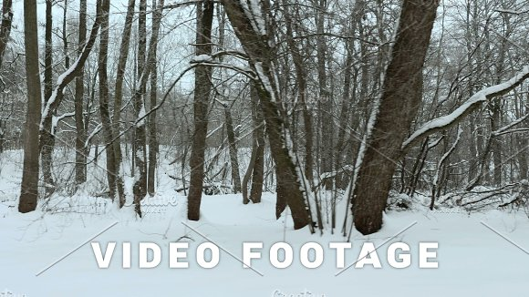Snow In The City Park Used Professional Gimbal Stabilazer