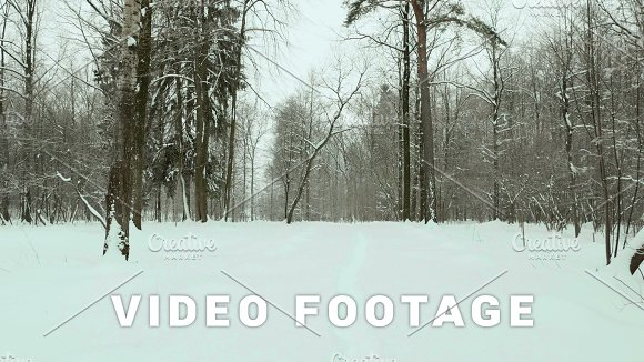 Footpath In The Winter Forest Used Professional Gimbal Stabilazer