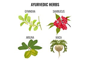 Ayurvedic herbs set isolated on white. Gymnema, sambucus, maca, arjuna