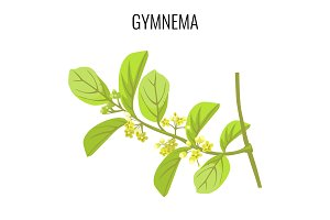 Gymnema ayurvedic medicinal herb isolated on white background. Realistic vector