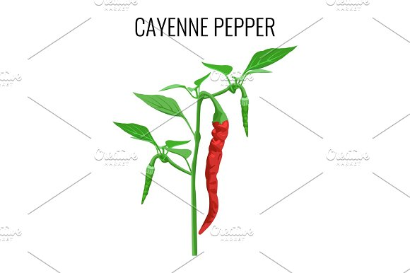 Cayenne Pepper Pod On Green Stem With Leaves