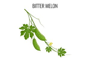 Bitter melon on white background isolated