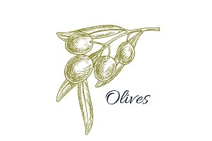 Green olive branch sketch for organic food design