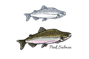 Salmon fish sketch for seafood and fishing design