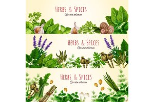 Fresh green herbs and spices banner set