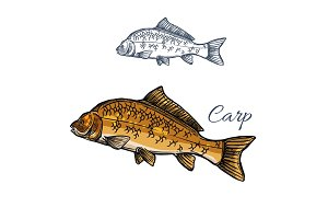 Carp fish isolated sketch for food themes design