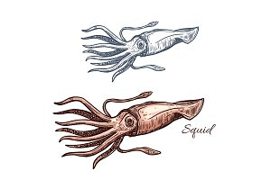 Squid marine animal sketch for seafood design