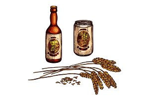 Beer, lager and ale drinks sketch with bottle, can