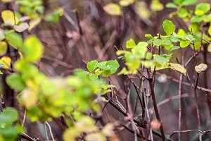 Moments of nature life