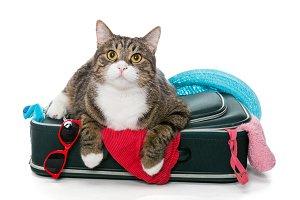 Cat traveler and suitcase