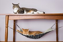 Two domestic cat sleeping,