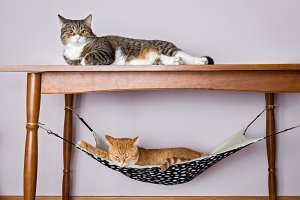 Two domestic cat sleeping,