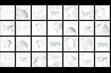 Molecular patterns v.3