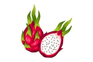 Dragon fruit isolated on white background. Illustration of tropical plant