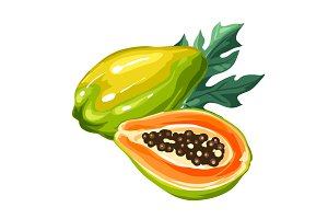 Papaya isolated on white background. Illustration of tropical plant