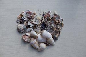 Seashells in shape of heart