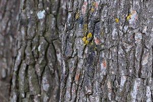 Tree Trunks Background