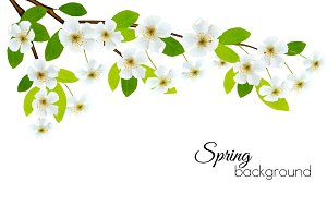 Spring background with white flowers