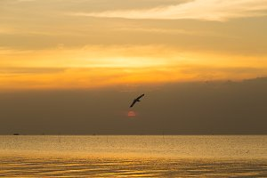 Bird flying in the sea