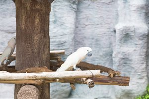 A white parrot
