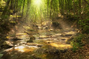 Fairy mountain forest at the river