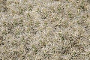 background cactus