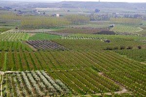 Fruit fields
