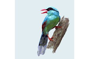 Common green magpie bird