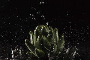 Artichoke and Water Drops