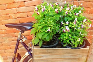 flower pots in wooden box on bicycle