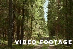 Forest paths. Smooth, slow slider shot. Clean and bright daytime