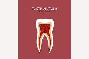 Tooth Vector Icon