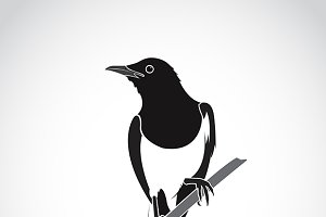 Vector of bird on white background.