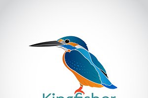 Vector of Common kingfisher. Bird