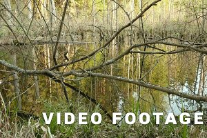 Tree branches in pond in forest. Smooth slider shot. Clean and bright daytime
