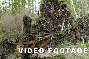 Tree root in the forest. Smooth and slow slider shot.  Clean and bright daytime