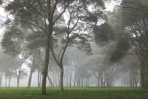 tea gardens in pangalengan west java