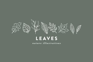 Leaves / hand-illustrations