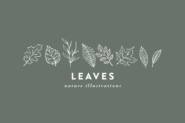 Leaves / hand-illustrations