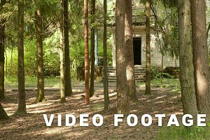 Abandoned house in the forest. Smooth and slow dolly shot