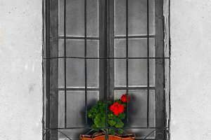 Window with geranium