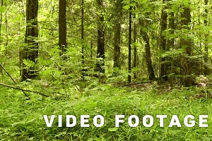 Forest. Smooth and slow crane cam shot. Clean and bright daytime